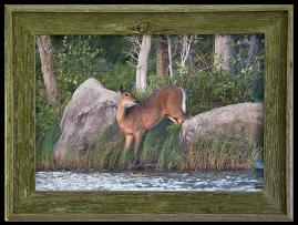 Barnwood Frame with Deer