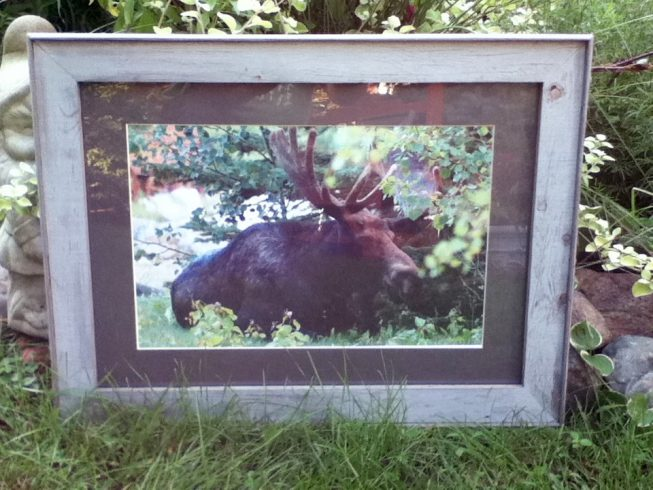 Barnwood Frame with Moose