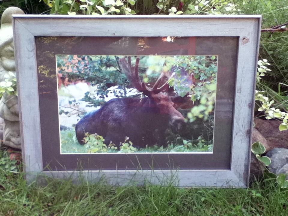 Barnwood Frame with Moose