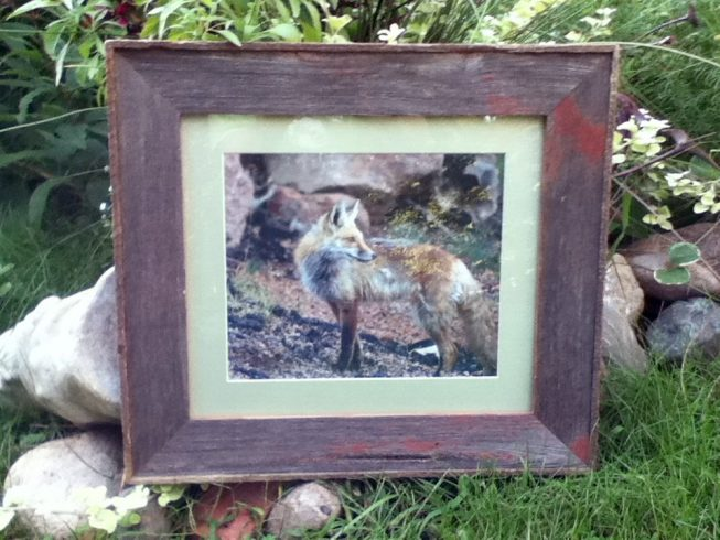 Barnwood Frame with Fox