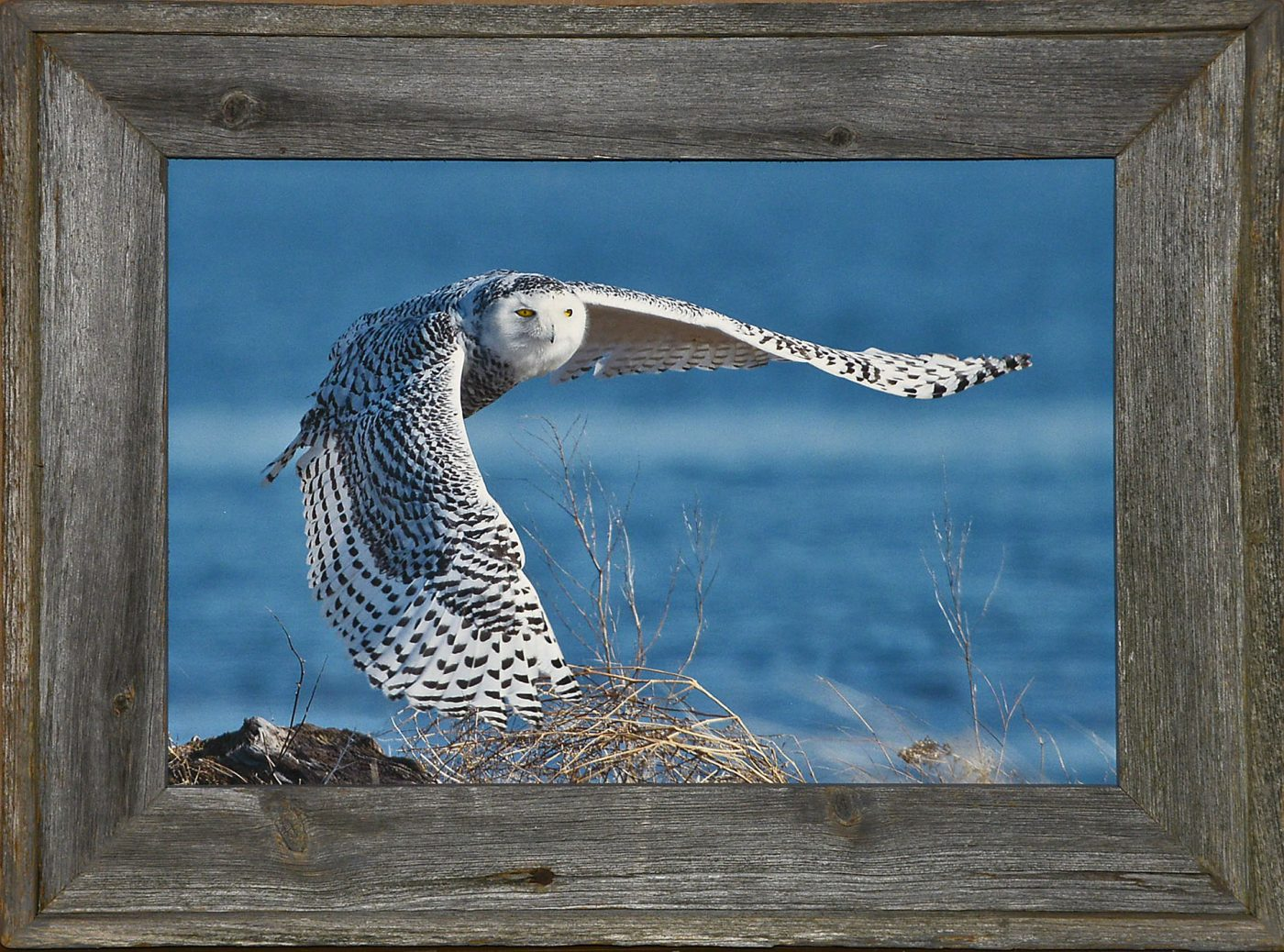 Barnwood Frame with Owl