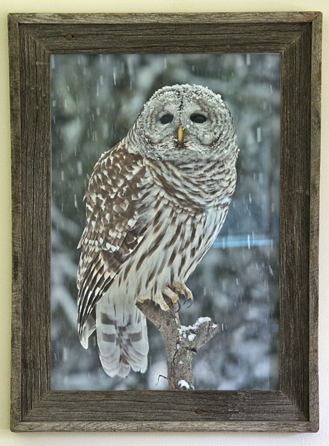 Barnwood Frame with Owl in Tree