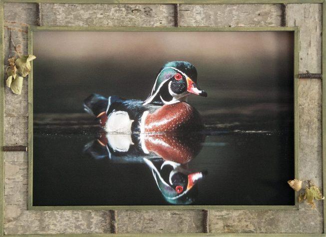 Barnwood Frame with Duck